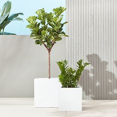 Shop blox galvanized hi-gloss white planters. Brite white planters square up sleek and modern. Protected for indoor and outdoor settings, hi-gloss lacquered galvanized steel plays up refined industrial to dramatic effect. Galvanized Planters, Black Planters, Resin Planters, Glass Planter, Herb Planters, Modern Planters, Large Planters, Outdoor Planters, Garden Pots