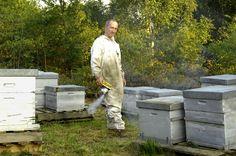 rencontre avec Laurent, notre apiculteur aux gants blancs