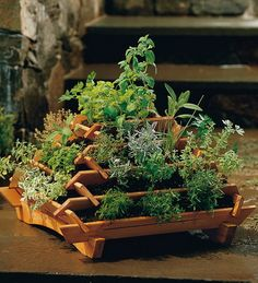Pyramid planter for herbs
