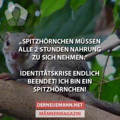 Spitzhörnchen #derneuemann #humor #lustig #spaß
