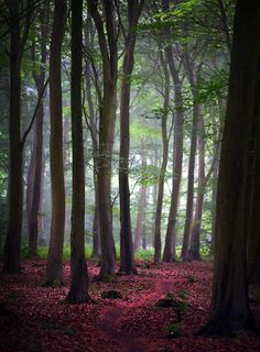 Friston Wood - England
