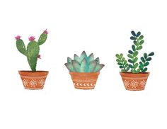 Succulents I   Art Print by beautifique on Etsy