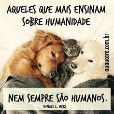 Grande verdade! #regram @auau_care que super recomendo! #frases #animais #amorincondicional #auaucare