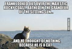 Frank the cat