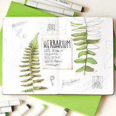 Ich lieben Pflanzen und Bäume, das ist wohl eine Lebensaufgabe für mich... Herbaium