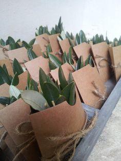 olive leaf confetti - Google Search