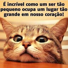 É MTO AMOR!!! ❤️❤️❤️ #petmeupet  #gato  #amogato  #amoanimais