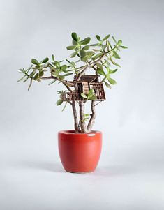 Artist Jedediah Corwyn Voltz constructs miniature handcrafted tree houses around common houseplants, bonsais, succulents and cacti. Small Indoor Plants, Potted Plants, Mini Mundo, Pot Plante, Miniature Trees, Fairy Houses, Tree Houses, Cactus Y Suculentas, Houseplants