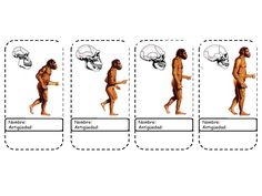 """Aquí tenéis en color el """"foldable"""" (recortable) que hemos elaborado en clase de la evolución humana, con algunos de los homínidos del árbo... Era Paleolítica, Do A Dot, Early Humans, Human Evolution, Ap Biology, Stone Age, School Humor, Home Schooling, Social Science"""