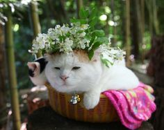Shironeko, the Most Content and Relaxed Cat on Earth. (can be found on Facebook)