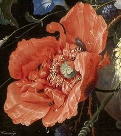 Botanical Art, Botanical Illustration, Big Flowers, Beautiful Flowers, Poppy Decor, Baroque Painting, Detailed Paintings, Art Oil, Oeuvre D'art