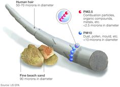 Particulate matter: PM2.5 (combustion particles, organic compounds etc.) and PM10 (dust, pollen, mould etc.) in comparison to a human hair