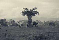 TREE OF LIFE. Nepal 2012