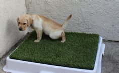 Teach your dog where to poo and where to pee. It could be the best solution for training your pets. Simply grab the tray of grass and place wherever you please.