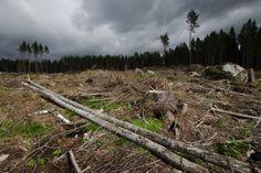 Lähes 200 tutkijaa ympäri maailman vetosi EU:n metsähakkuiden rajoittamisen puolesta.  EU:n parlamentti äänesti syyskuun 13. ..