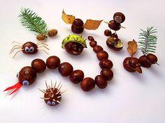 Kastanientiere chestnut animals