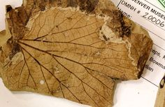 Dino-Killing Meteorite Gave Way to Leafy Forests 9/16/14 // BY PAUL HELTZEL : Discovery News