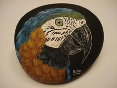 Blue and Gold Macaw hand painted on a rock by wildstonepainter, $20.00