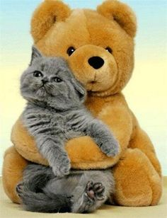 A bear and his kitty. Baffled how they got the cat to sit long enough to take a picture lol