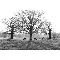 """#richmondpark #london #bwstyles_gf #mycanon"""