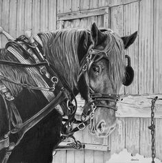 Pencil on bristol paper Size: x Time: 17 hours Ready for a sleigh ride Christmas Drawing, Pencil Art, Horses, Deviantart, Drawings, Animals, Rock, Christmas Design, Animales