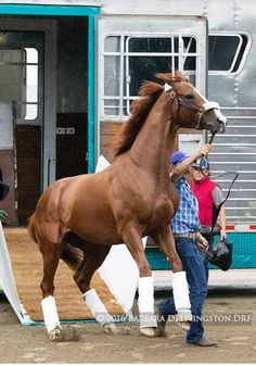 Found this old pic Mufasa, apparently he is a race horse , but since 2 years learned dressage but got broke , he raced 2 or 3 times and got broke , his not officially an ottb but maybe his old Owners bad treated him , poor mufasa - Athila