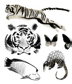 Trafficked Animals by Jillian Tamaki. Appeared in National Geographic alongside an article on the illegal trafficking of endangered wildlife through Asia.