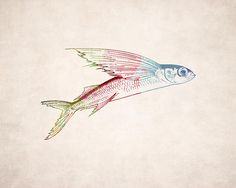 1000 images about tattoo ideas on pinterest fish art for Flying fish drawing