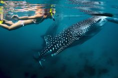 The best activities and private tours in Cabo San Lucas