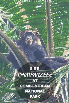 Gombe Stream National Park Chimpanzee Visit In Tanzania