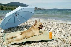 The Frenchie Riviera