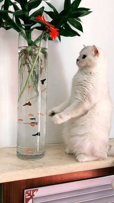 Facts About Cats That Will Blow Your Mind Catlovers Kittens - Funny Animal Videos, Cute Funny Animals, Cute Baby Animals, Animals And Pets, Cute Cats, Funny Cats, Silly Cats, Beautiful Cats, Animals Beautiful