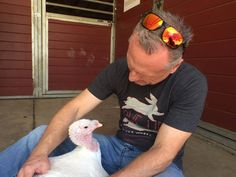 Rescued Turkey Loves To Get Massages Now