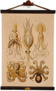 Chart #117 Octopus & Squid would be cute in boy's room