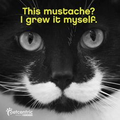 Mustached kitty