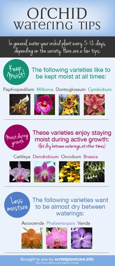 How to Water Orchids - Orchid Plant Care