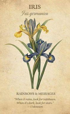 Victorian Flowers, Vintage Flowers, Botanical Art, Botanical Illustration, Flower Meanings, Royal Garden, Card Book, Language Of Flowers, Flower Aesthetic