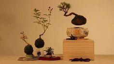 """Você já imaginou ter em casa um pequeno bonsai flutuando no ar? O Bonsai que flutua já se tornou realidade e seus criadores buscam financiamento colaborativo para torná-lo disponível para vendas. Designers da empresa Hoshinchu, de Tóquio, no Japão, conseguiram através do uso do magnetismo tornar o que parecia impossível em realidade. O Air Bonsai, como ficou conhecido, possui dois elementos: a base, chamada de """"base energética"""" e uma pequena """"bolinha"""" que flutua incessantemente, que é o…"""