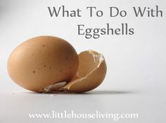 "Eggshells are plentiful in any household with chickens. But when you think about it, eggshells have many more purposes than just protecting the eggs! Just like anything else, eggshells can be ""repurposed"". Here are a bunch of different tips to use eggshells for!"