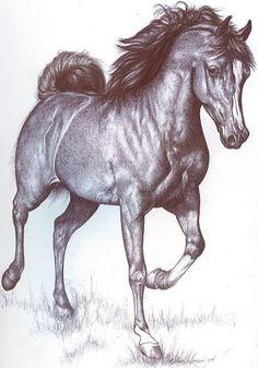draw horses - Google zoeken