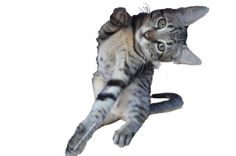 KITTEN plays by GorgeousPhotos on Etsy, $30.00