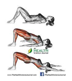 © Sasham   Dreamstime.com – Yoga exercise. Bridge Pose. Setu Bandhasana. Female