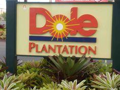 Dole Plantation. Pineapple ice cream is good!