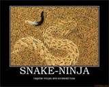 Snake ninja Ninja Funny, Snake, A Snake, Snakes