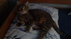 Cat Emma