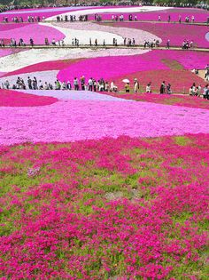Mother Nature's Hand at Pastels in Hitsujiyama Park (羊山公園)   Chichibu, Japan