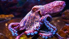 La fauna acuática tiene muchos secretos y los biólogos marinos están en el inicio de hacer peque...