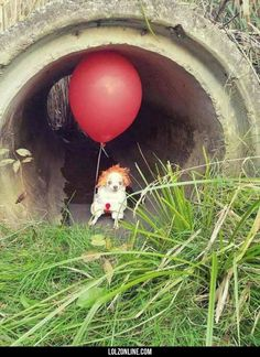 We all bork down here#funny #lol #lolzonline