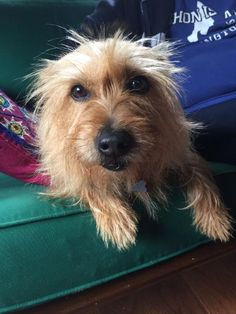 Meet Hailey, an adoptable Terrier looking for a forever home. If you're looking for a new pet to adopt or want information on how to get involved with adoptable pets, Petfinder.com is a great resource.