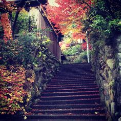 A path to Cafe Moán, Kyoto. #Kyoto